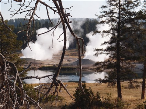 Geyser in Yellow Stone