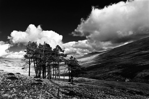 north wales B&W-5