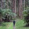 ForestScene