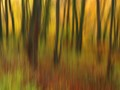 Impressionism by intentional camera movement
