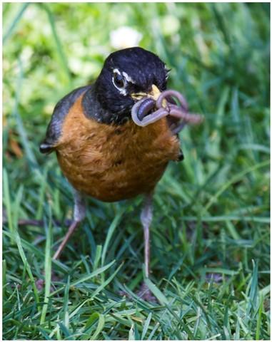 Greedy Bird 04