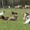 Lammetjes schaapskooi 010-2