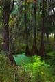 Cypress Swamp, South Carolina