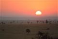 Serengueti sunrise