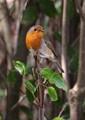 Robin:)