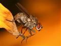 Fall Fly