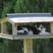Cat in the bird feeder