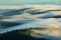 The Rolling Fog