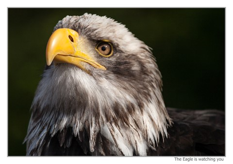 The Eagle is watching you