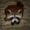 raccoon-peeking-through-tree