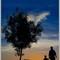 Back-lit-tree-2