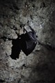 Bat in a mine entrance hidden in the forest