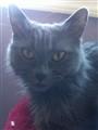 Wendy cat