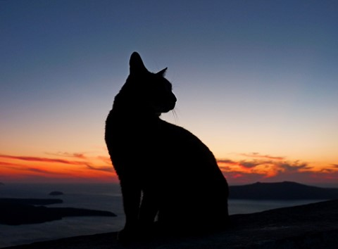 Feline silhouette
