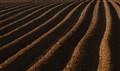 Plough lines