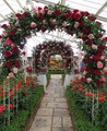 Malvern indoor rose garden
