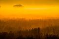 Golden hour fog