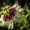 Passion Flower-4