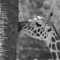Zoo Shot