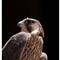 Falcon Time