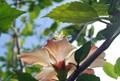 Under the hibiscus