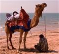 Shady Camel