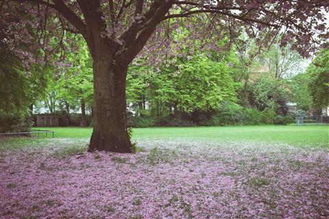 Fall in springtime