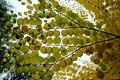 Straight up, Bellevue Botanical Garden