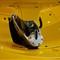 McLaren P1 Rear Spoiler Detail
