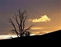 Timberline Sunset