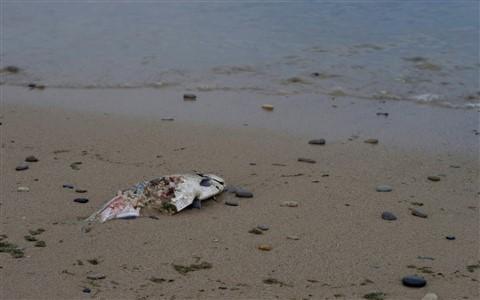 Really Dead Fish