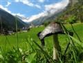 A mushroom in Italy