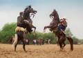 horse2crop