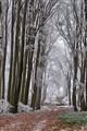 Winter steps in