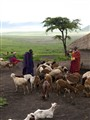 Maasai people with goats.