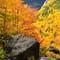 Treasures of fall
