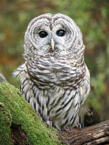 Owl 1763 Sx40 1024