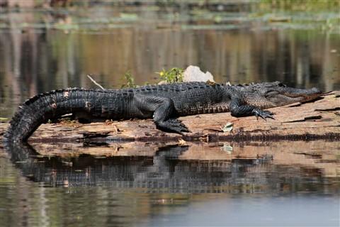 Swamp   Sept. 21 190