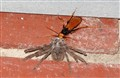Wasp and Huntsman
