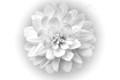 white flower-