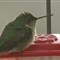 Hummingbird 20120114