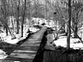 Path To Spring 2011-03-03B