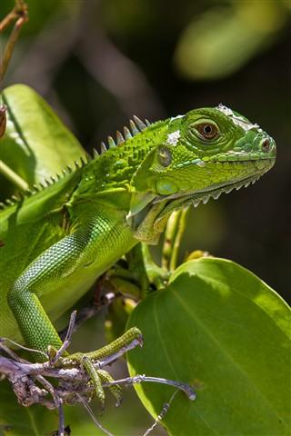 Lizard (1 von 2)