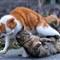 a quarrel