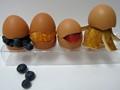Eccentric Eggs