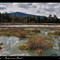 Peat lake - Bohemian Forest 2_4046_DxO_tn