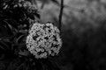black and flower_