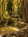 North Colony Creek Fall