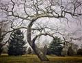 """The """"Limbo"""" Tree"""