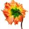 ORANGE_FLOWER_BACK
